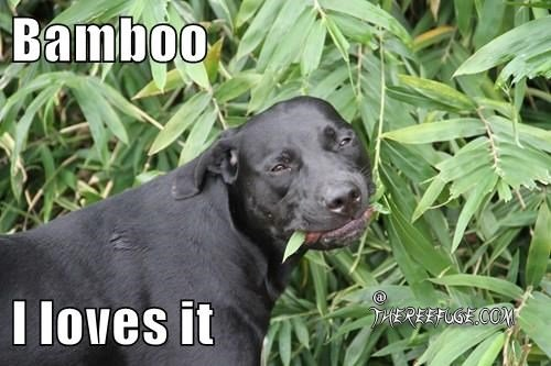 awww.freakyshiat.com_upload_files_312_bamboo.jpg