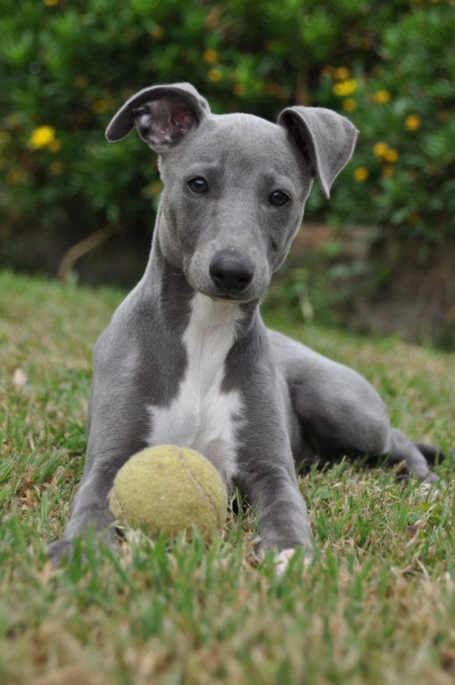 puppy oscar .JPG