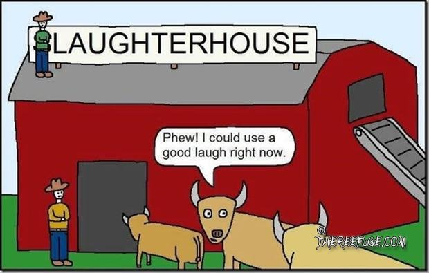 slaughter-house-funny-cows.jpg
