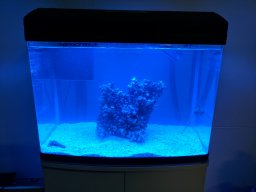 An Irish Mans first reef tank